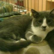 GUSTAVE - M - Né le 06/04/2011 - Adopté en Aout 2011