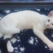 GWANA - F - née le 10/04/2011 - Adoptée en Aout 2011