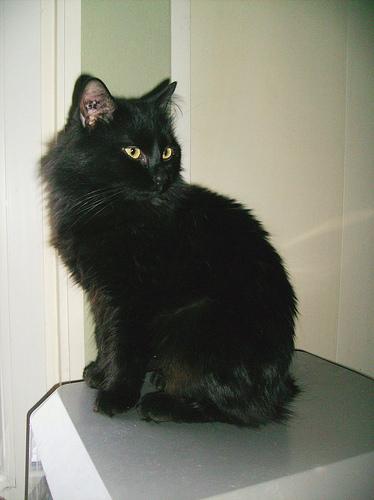 MAESTRO - M - Né en 2006 - Adopté le 30/01/2010