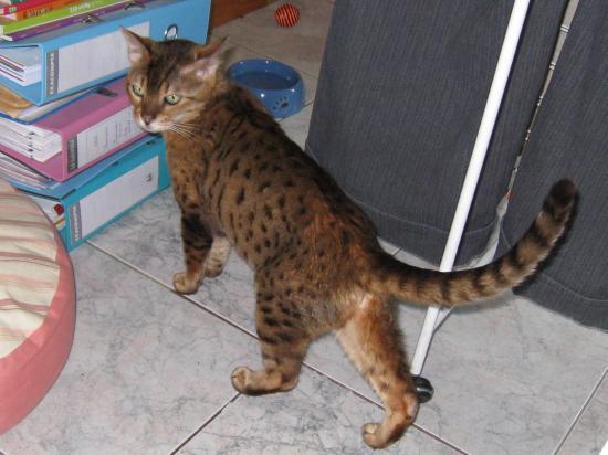 OLIVIA - F - Née le 26/06/1998 - Adoptée en novembre 2010.