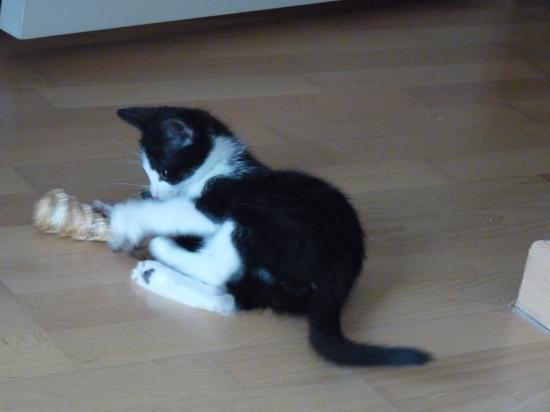 FOOTIX - Né le 15/03/2010 - Adopté en juin 2010.