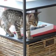FINGER - M - Né le 15/03/2010 - Adopté en juin 2010
