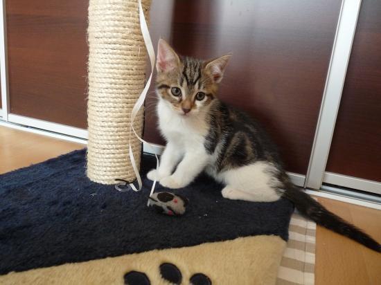 FANGIO - M - Né le 15/03/2010 - Adopté en juin 2010.