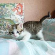 FAUSTINE - F - Née le 04/04/2010 - Adoptée en juin 2010.
