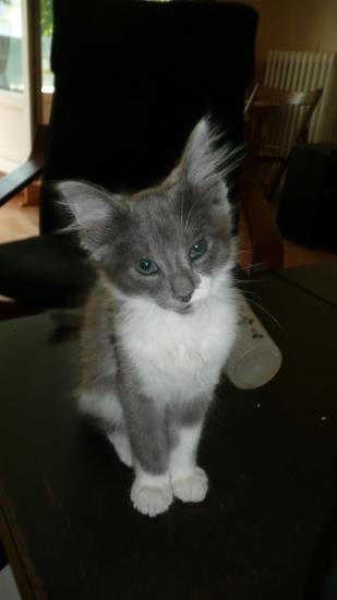 FILAO - M - Né mi-mai 2010 - Adopté en août 2010.