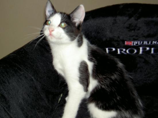 FOLLOW - M - Né le 01/08/2010 - Adopté en novembre 2010