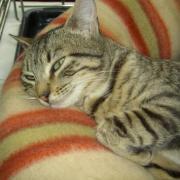 Galinette - F - Adoptée en avril 2011