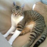 GALOPIN - M - Ne en novembre 2010 - Adopte en avril 2011