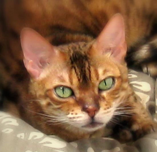 DEMIRA - F - Née le 20/05/2004 - Adoptée en janvier 2011.