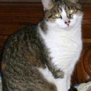 GAELLE - F - Née en 2010 - Adoptée en février 2011
