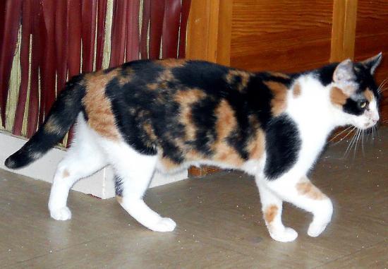 AGATHE - Née en novembre 2008 - Adoptée en mars 2011