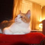 CALINE - F - Née le 01/07/2008 - Adoptée le 30/12/2009