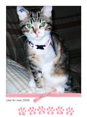 CHANCE - F - Née en mai 2009 - Adoptée en novembre 2009