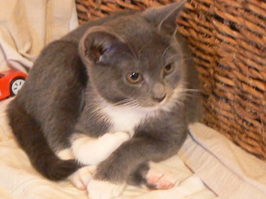 GRIGRI - M - Né le 01/07/10 - Adopté en décembre 2010