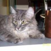 DICKY - M - Né en mai 2008 - Adopté le 04/07/2009
