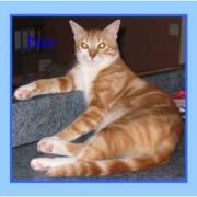 DIOR - M - Né le 15/07/2008  - Adopté en janvier 2009