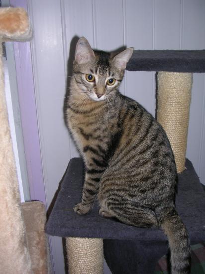 EKTOR - M - Né le 15/04/2009 - Adopté en aout 2011