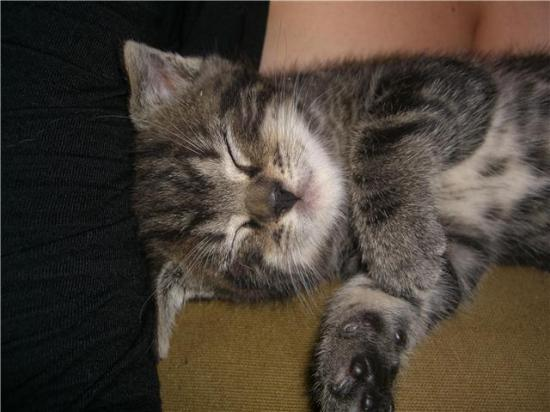 ELI - M - Né le 25/08/2009 - Adopté en décembre 2009