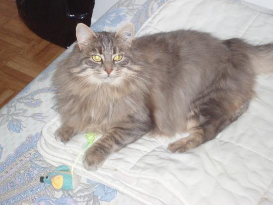 ELOISE - F - Née en février 2008  - Adoptée le 01/04/2009
