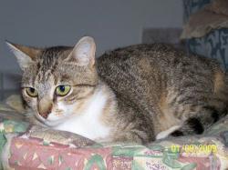 ELOUANA - F - Née le 01/01/2007 - Adoptée le 01/03/2010