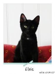 ELVIS - M - Né le 20/04/2009 -  Adopté en novembre 2009