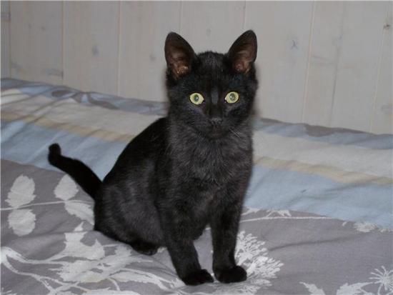 ELYOS - M - Né le 1er juillet 2009 - Adopté en novembre 2009