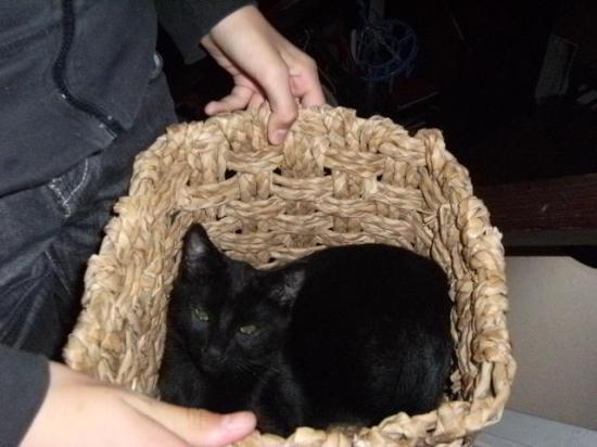 ENJOY - M - Né fin mai 2009 - Adopté en décembre 2009