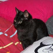 ENOHA - F - Née le 01/08/2009 - Adoptée le 19/12/2009