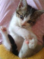 ETIK - M - Né le 01/10/2009 - Adopté en janvier 2010