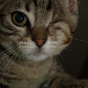 EUREKA - M - Né le 01/05/2009 - Adopté le 01/08/2009
