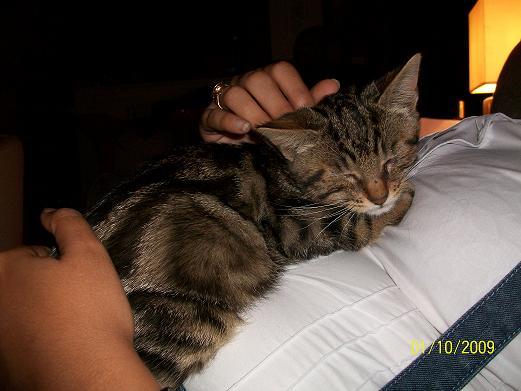 EYZOO - M - Né le 01/06/2009 - Adopté le 04/01/2010