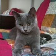 FEELING - F- Née le 24/03/2010 - Adoptée en décembre 2010