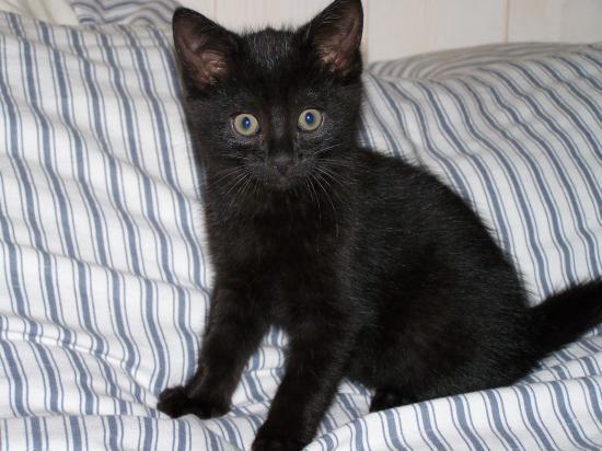 FELISHA - F - Née le 12/08/2010 - Adoptée en octobre 2010.