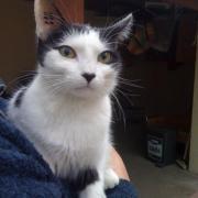 FERIA -Née en juillet 2009 - Adoptée en février 2011