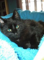 FETICHE - M - Né le 01/07/2010 - Adopté en janvier 2011