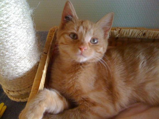 FIGARO - M - Né le 01/11/2009 - Adopté le 22/02/2010