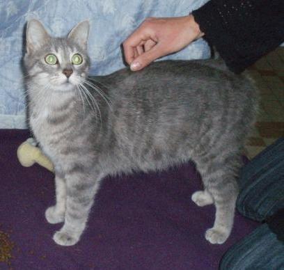 FILOMENE - Née en mai 2009 - Adoptée en février 2011