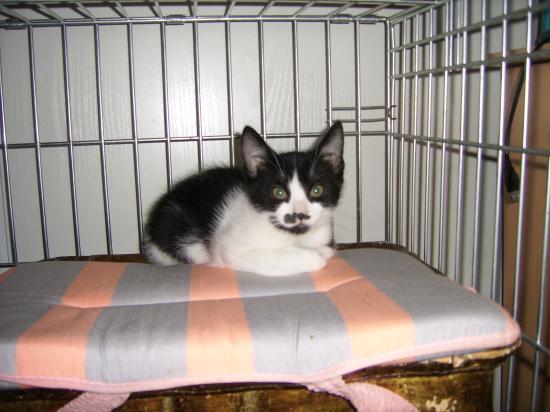 FISH - M - Né le 10/09/10 - Adopté en decembre 2010