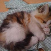 FLEUR - F - Née le 20/02/2010 - Adoptée en avril 2010