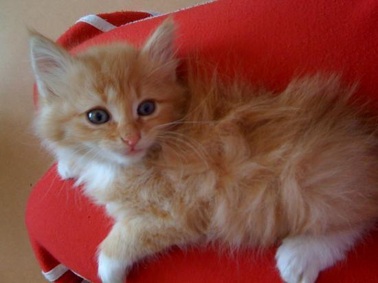 FLOOPY - M - Né le 20/02/2010 - Adopté en avril 2010