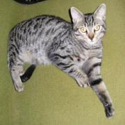 FOREST - M - Né en mai 2010 - Adopté en octobre 2010