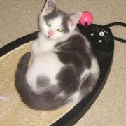 FUEGO - M - Né le 10/09/10 - Adopté en décembre 2010