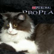 FUNNY - M - Né vers le 13/03/2010 - Adopté en novembre 2010.