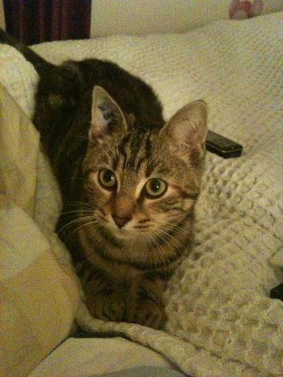FURETTE - F - Adoptée en décembre 2010