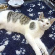GALAI - M - né le 10/04/2011 - Adopté en Aout  2011