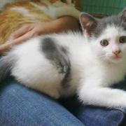 GEPPETTO - M - Né le 20/05/2011 - Adopté en septembre 2011