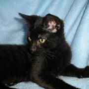 GOSPELL - M - Ne en mars 2011 - Adopte en juin 2011