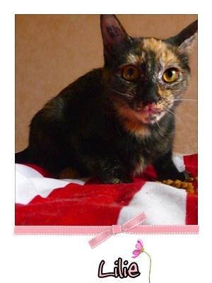 LILIE - F - Née le 16 Avril 2009 - Adoptée en octobre 2009