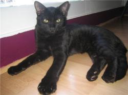 EAGLE - M - Né le 15/04/2009 - Adopté en octobre 2009