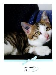 E.T - M - Né le 15/06/2009 - Adopté en octobre 2009